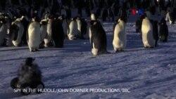 Robot Pinguino