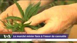 Le marché minier face a l'essor du cannabis