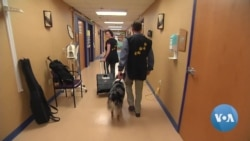 Therapy Dogs Help Patients in Hospital Intensive Care Unit