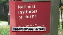 美研究人员称埃博拉疫苗通过初检