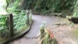 آبشار پارک تیجوکا در برزیل