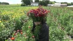 苗族裔美国农民推动明尼苏达州食品经济