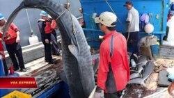 Philippines bắt 10 ngư dân Việt săn cá mập ở Palawan