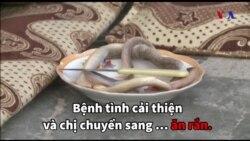 Ăn rắn chữa ung thư?