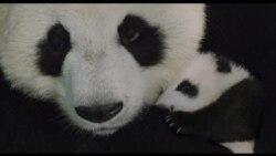 Estreno de cine: Nacido en China