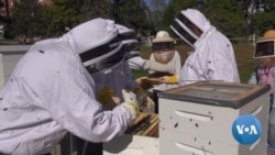 Beekeeping Helps Veterans Cope With Stress, Anxiety