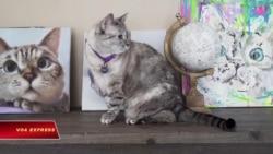 Con mèo biến chủ nhân thành triệu phú