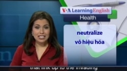 Anh ngữ đặc biệt: Influenza Virus Disarms Body's First Line of Defense Against Disease (VOA-Health Report)