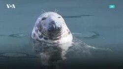Тюленьи радости
