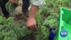 英语视频:西维吉尼亚农村地区缺乏互联网