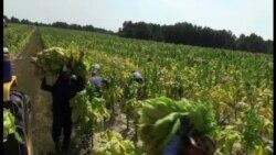 미 농가들, 이민 개혁 기대