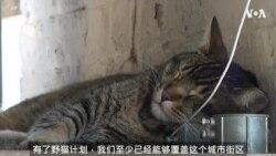 芝加哥利用野猫解决鼠患问题
