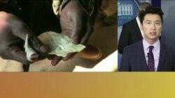 VOA连线:川普要处理阿片类毒品,呼吁对朝鲜强硬