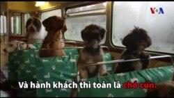 Tour du lịch dành riêng cho chó