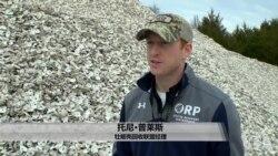 美国万花筒:餐厅回收牡蛎壳 取之海湾回归海湾