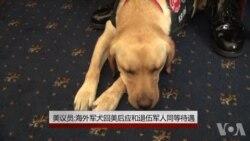 美议员:海外军犬回美后应和退伍军人同等待遇