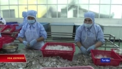 Hàn Quốc kiểm tra tôm xuất khẩu Việt Nam