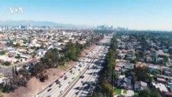 Ученые из Калифорнии обнаружили, что деревья загрязняют воздух Лос-Анджелеса
