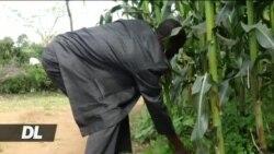 Wakenya zaidi ya milioni 2 bado wanategemea chakula cha msaada kila mwaka