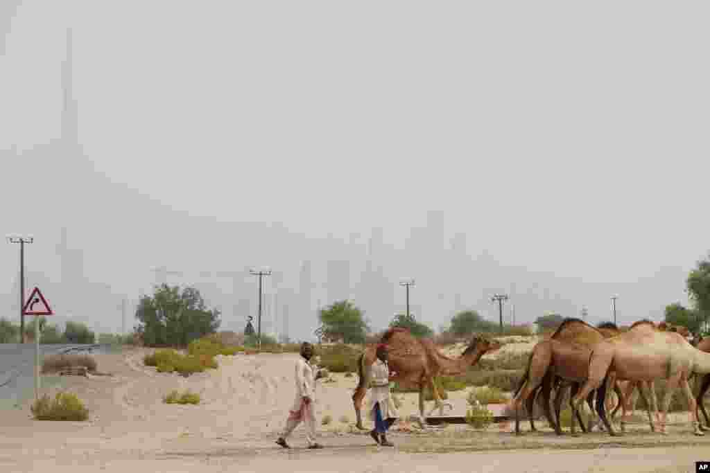 عبور دو شترچران با گله شترها، در حالیکه برج خلیفه بزرگترین ساختمان جهان، در دوردست در میان طوفان شن در دبی دیده میشود.
