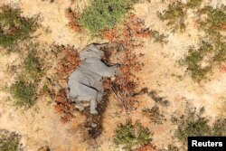 រូបឯកសារ៖ សត្វដំរីមួយក្បាលបានស្លាប់ នៅក្នុងរូបភាពដែលមិនមានកាលបរិច្ឆេទច្បាស់លាស់មួយ ក្នុងតំបន់ដីសណ្តរ Okavango ប្រទេសបុតស្វាណា កាលពីឆ្នាំ ២០២០។
