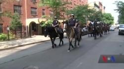 Підрозділ поліції Нью-Йорка, що піклується за патрульними конями з 1858 року. Відео