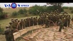 Manchetes Africanas