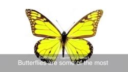 «Английский за минуту»: to have butterflies