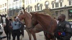 华盛顿国际马术比赛举办骑警队见面会