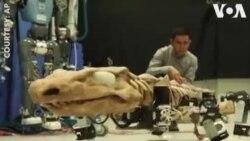 ԱՌԱՆՑ ՄԵԿՆԱԲԱՆՈՒԹՅԱՆ. Կոկորդիլոս ռոբոտի շարժումները չափազանց մոտ են իրականին