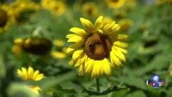 走进美国:太阳花与野生动物