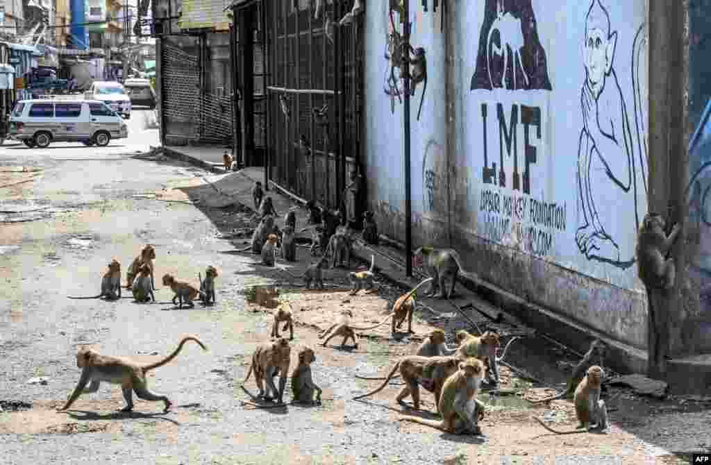 مندر اور اس کے آس پاس کے علاقے پر بندروں کا زور ہے۔ درجنوں کی تعداد میں بندر یہاں گھروں کی دیواروں اور گلیوں میں گشت کرتے ہیں اور اچھلتے کودتے دکھائی دیتے ہیں۔