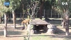 Bu Parkta Hayvanların Ömrü Uzuyor