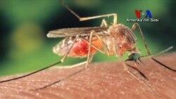 Batı Nil Virüsüyle Mücadele Devam Ediyor