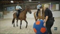 Як готують до служби коней-поліцейських і що чекає на тварин після «виходу» на пенсію. Відео