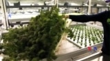 Indoor, Hi-Tech Farm Means Daily Fresh Produce for the Big City