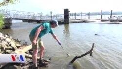 Jîngehparêzek bi Dilxwazî Ava Rûbarê Potomac Têst Dike