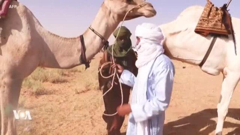 Une des principales courses de chameaux du Sahara se tient au Niger