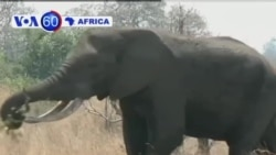 VOA60 Africa 25 Setembro 2013