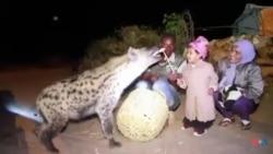 Seenaa waraabessa nyaachisuu kan magaalaa Harar