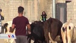 Li Gundê Gêjekan ya Kalar Kurd û Ereb Hevre Dijîn