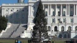 历经3460英里 国会圣诞树抵达华盛顿
