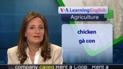 Anh ngữ đặc biệt: Backyard Chicken Farmers (VOA-Ag Report)