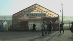 福岛向来访者力证食品安全