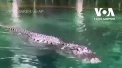 У Флориді жінка відігнала алігатора веслом. Відео