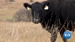 Ranchers Combat Overgrazing to Fight Climate Change