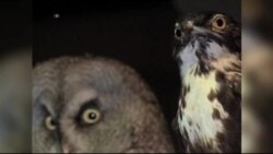 موزه تاریخ طبیعی پاریس مجموعه ای از جانداران شب زی راه اندازی کرده است