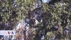 Bratunac: Radnici Elektrodistribucije spasili mačku iz krošnje drveta
