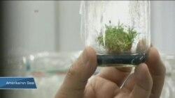 Bitkiler Kendilerini Morötesi Işınlardan Nasıl Koruyor?