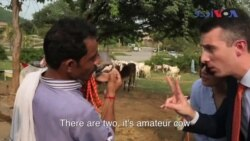 امریکی سفارت کار گائے خریدنے منڈی پہنچ گئے
